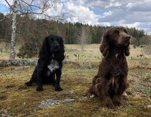 Enya och Tassen